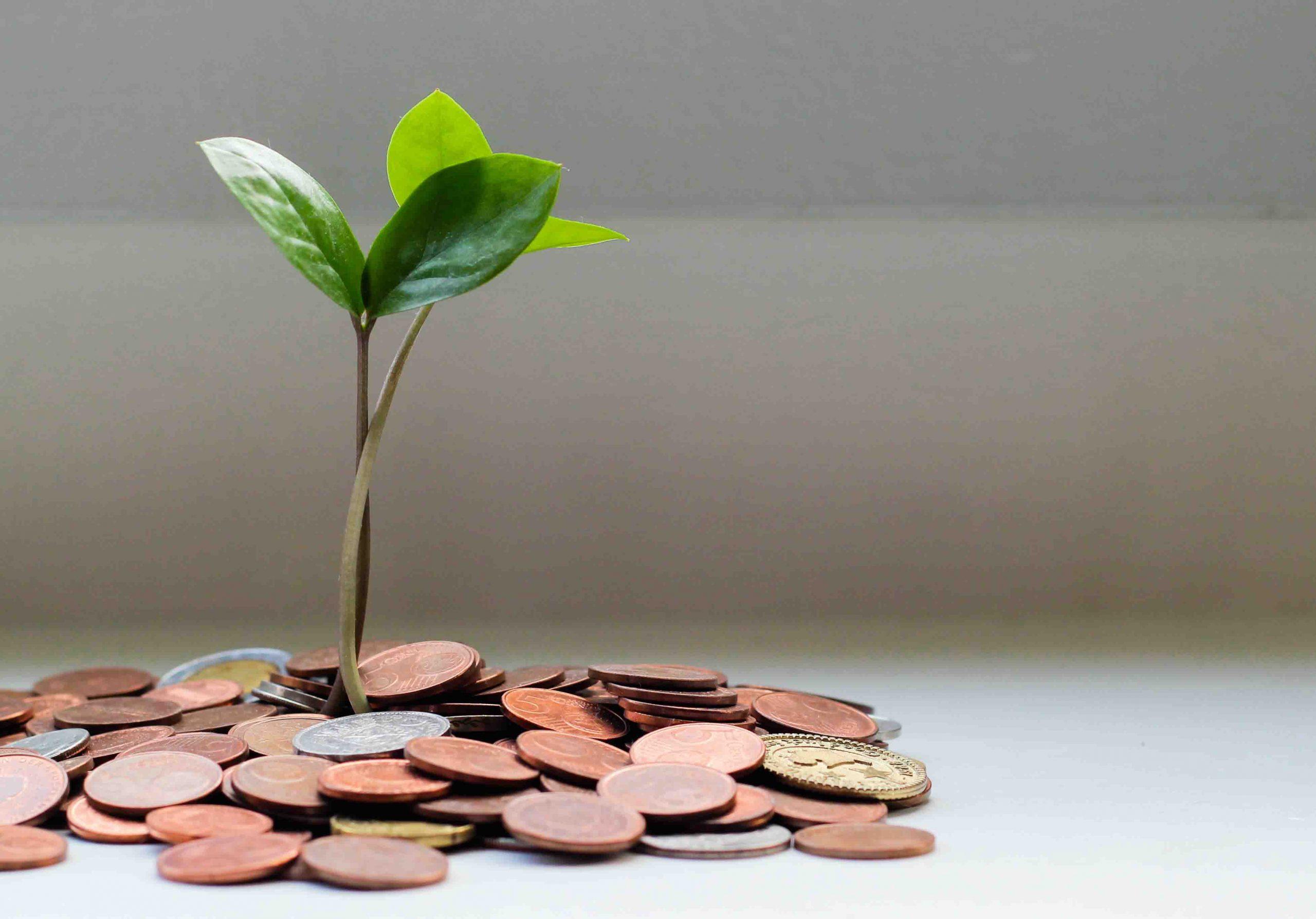 Financial Translation Services Pretoria